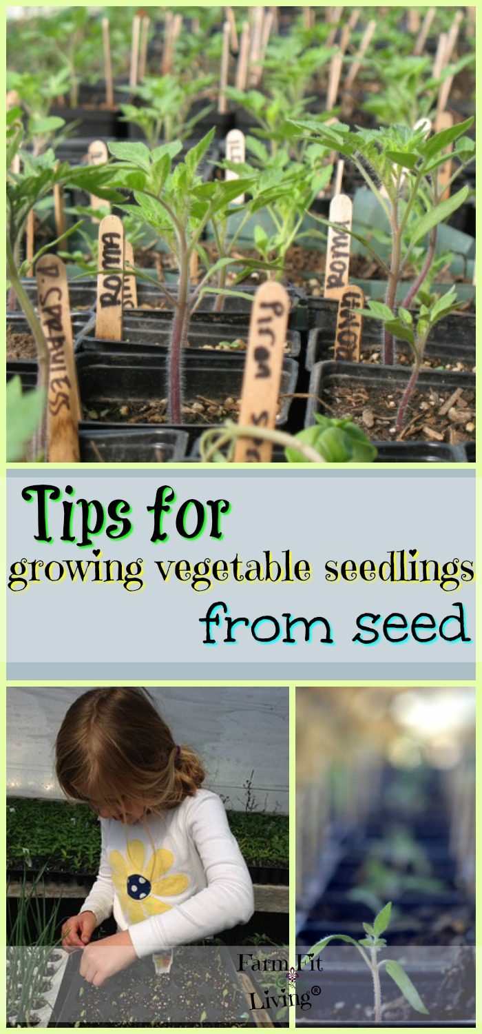 growing vegetable transplants from seed