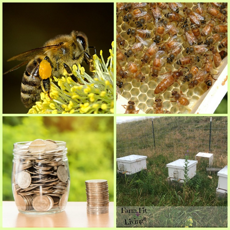 Start Beekeeping with Very Little Money