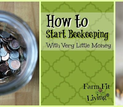 How to Start Beekeeping with Very Little Money