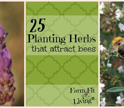 25 Planting Herbs that Attract Bees to your Garden