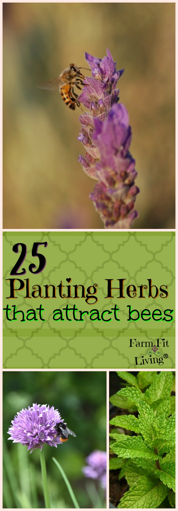 Are you looking for a way to help the bees that can also help you? Planting herbs that attract bees can also have medicinal and culinary benefits for you! Here's the best facts about the 25 herbs that bees love and we do, too.