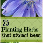 planting herbs that attract bees