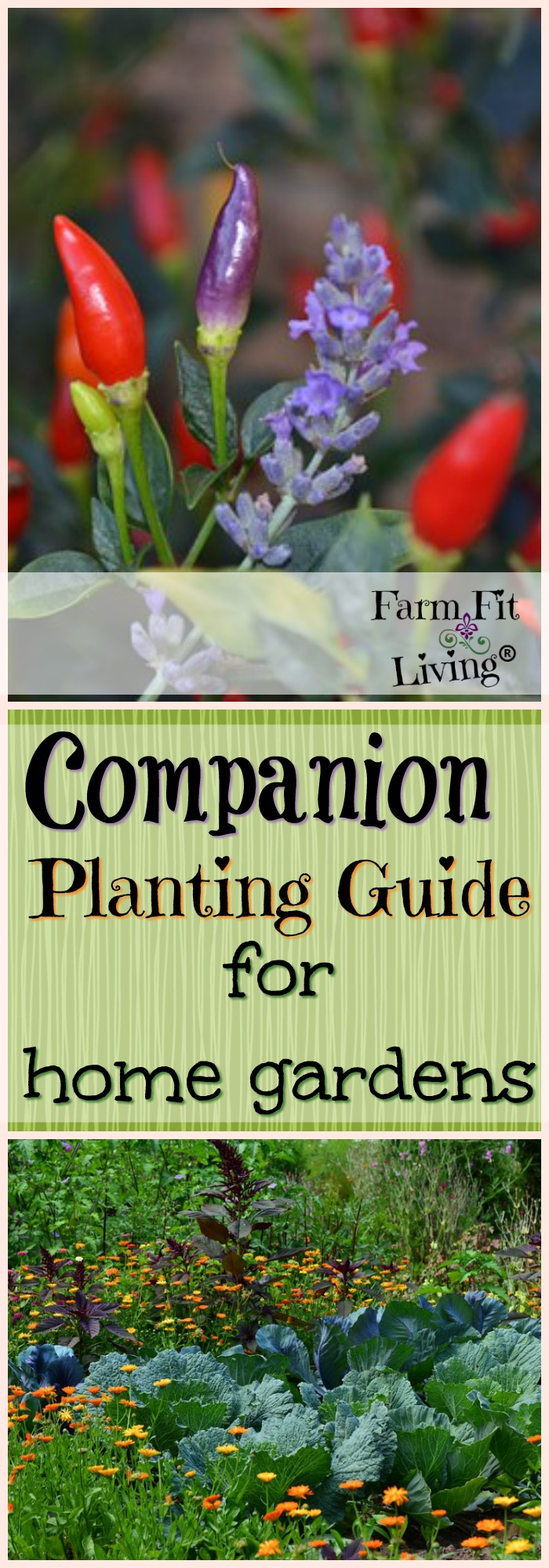 Looking for a companion planting guide that will tell you what to plant next to each other and what not to? I share the benefits as well as scientific data for successful companion plantings.