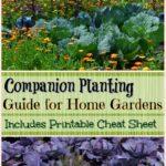 Companion Planting Guide for Home Gardens