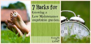 Growing a Low-Maintenance Garden