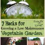 Growing a Low-Maintenance Garden