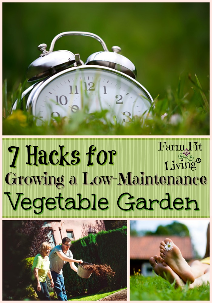 Growing a Low-Maintenance Vegetable Garden