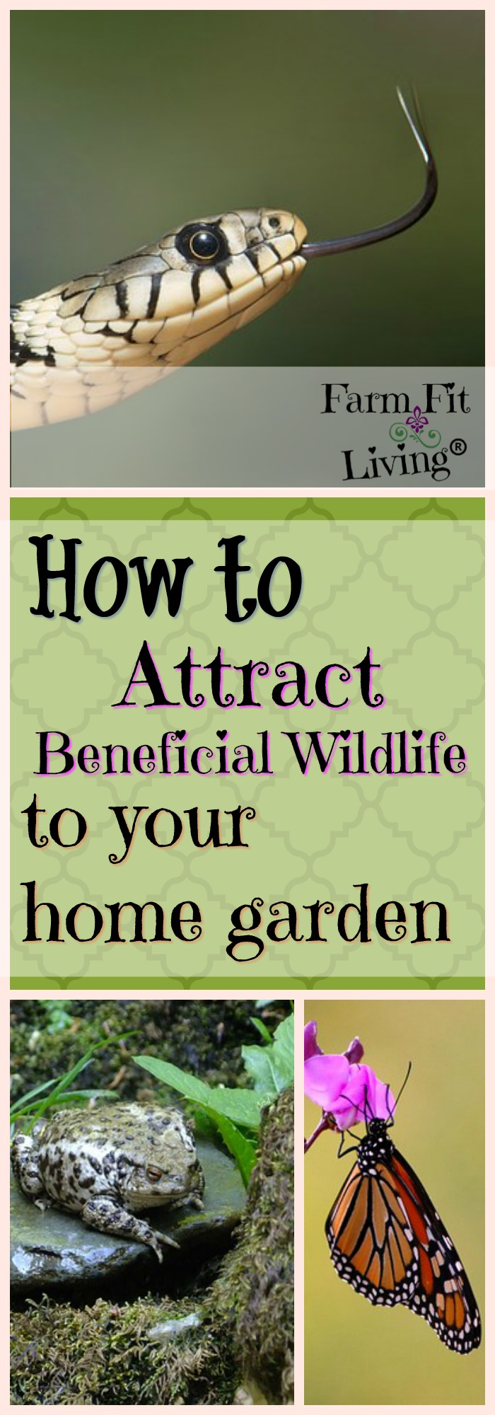 Are you looking for ways to control insects or enhance beauty and production in your garden? Here's how to attract beneficial wildlife to your home garden as well as which animals you need to have. #gardenwildlife