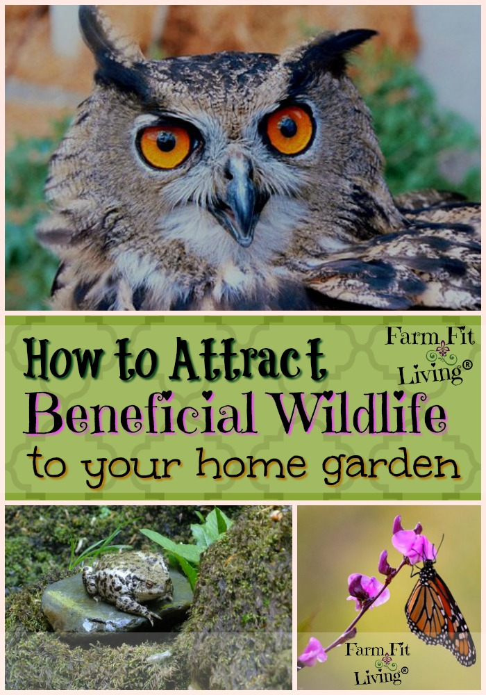 How to Attract Beneficial Wildlife to your home garden