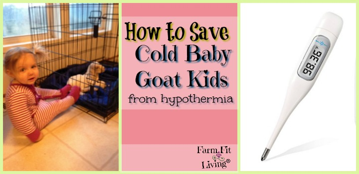 how to save cold baby goat kids from hypothermia