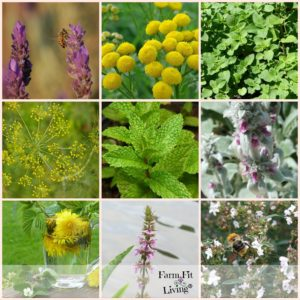 25 Planting Herbs that Attract Bees
