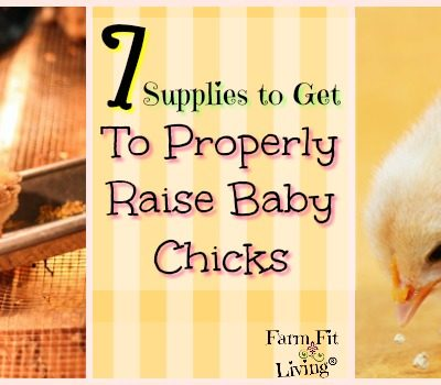 7 Supplies to Get to Properly Raise Baby Chicks