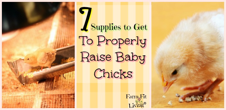 Supplies to get to properly raise baby chicks