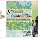 5 Wildlife Control Tips for the Home Garden