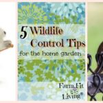 wildlife control tips
