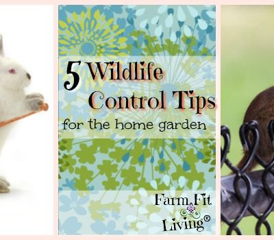 5 Wildlife Control Tips for the Home Garden