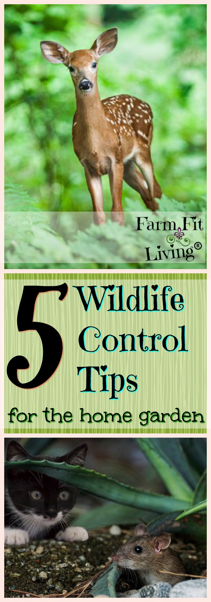 Rodents or Deer eating on your garden year after year? Make them stop! Take control of your garden again with these 5 Wildlife Control Tips for the home garden. #homegardentips #gardenhacks #wildlifecontroltips #farmfitliving