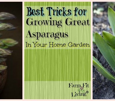 Best Tricks for Growing Great Asparagus in your Home Garden