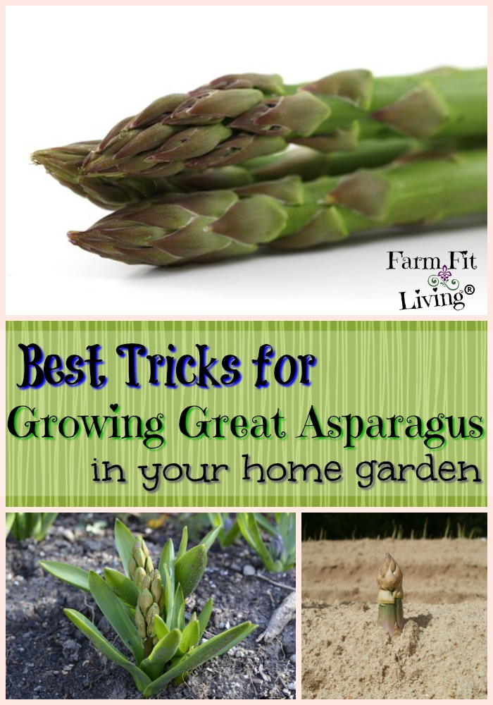 Tricks for Growing Great Asparagus
