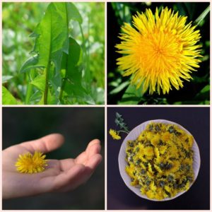 How to Make Money Selling Dandelions