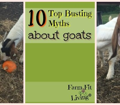 10 Top Busting Myths About Goats to Know