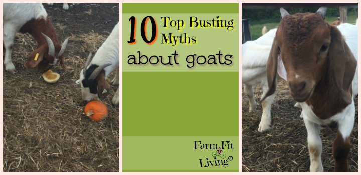 Busting Myths About Goats