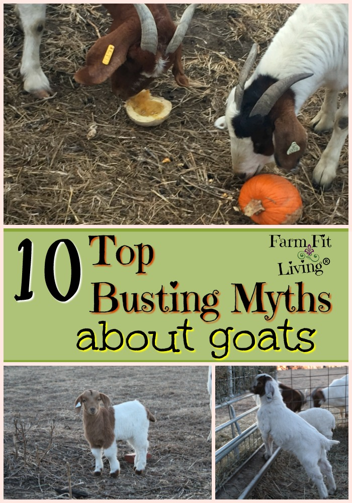Top Busting Myths About Goats