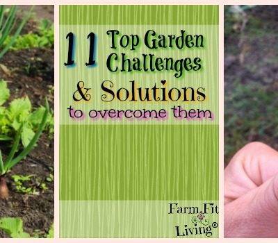 11 Top Garden Challenges & Solutions to Overcome Them