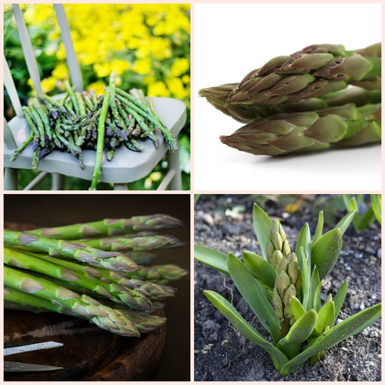 Best Place To Plant Asparagus: Best Tricks For Growing Great Asparagus In Your Home