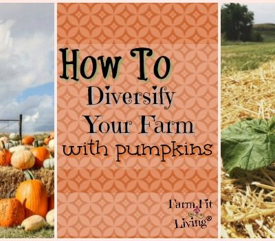 How to Diversify Your Farm with Pumpkins with Amy France