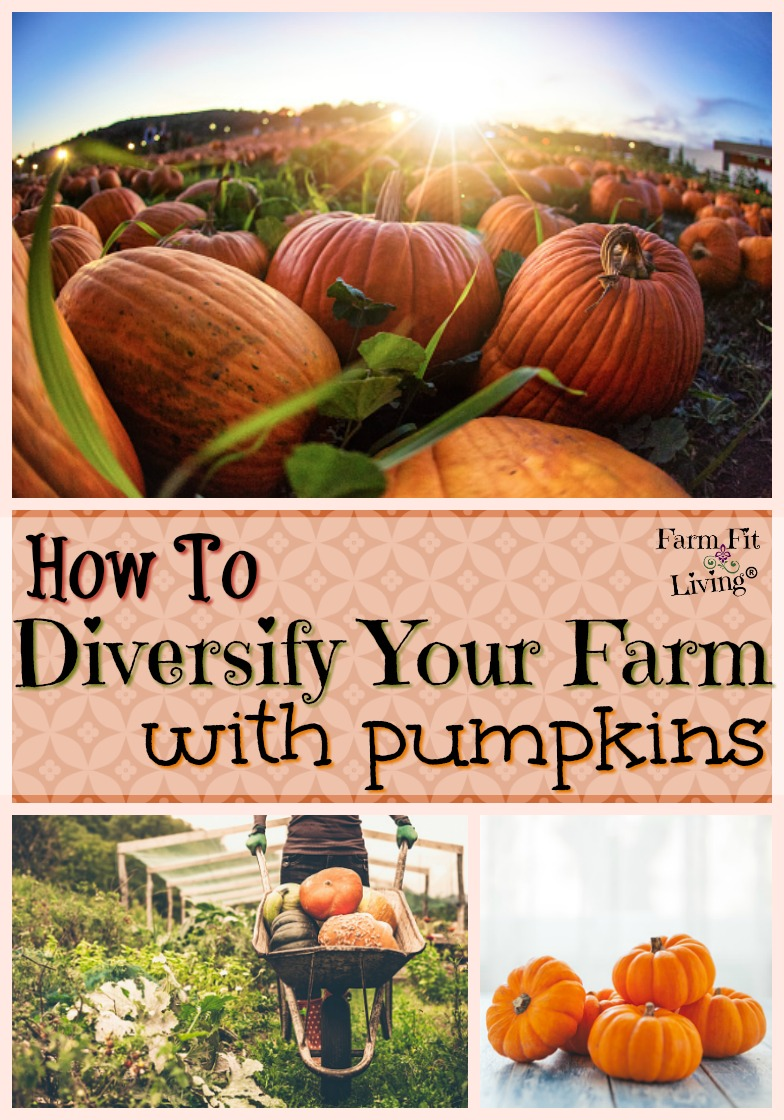 Are you wondering if you can diversify your farm with pumpkins? Check out this interview with my friend Amy France. She's telling us the story of how her family did just that.