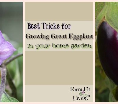 Best Tricks for Growing Great Eggplant in Your Home Garden