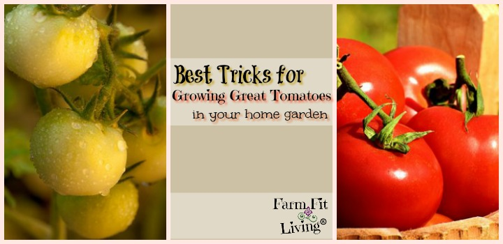Best Tricks for Growing Great Tomatoes