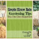 Simple Straw Bale Gardening Tips You Can Use Anywhere