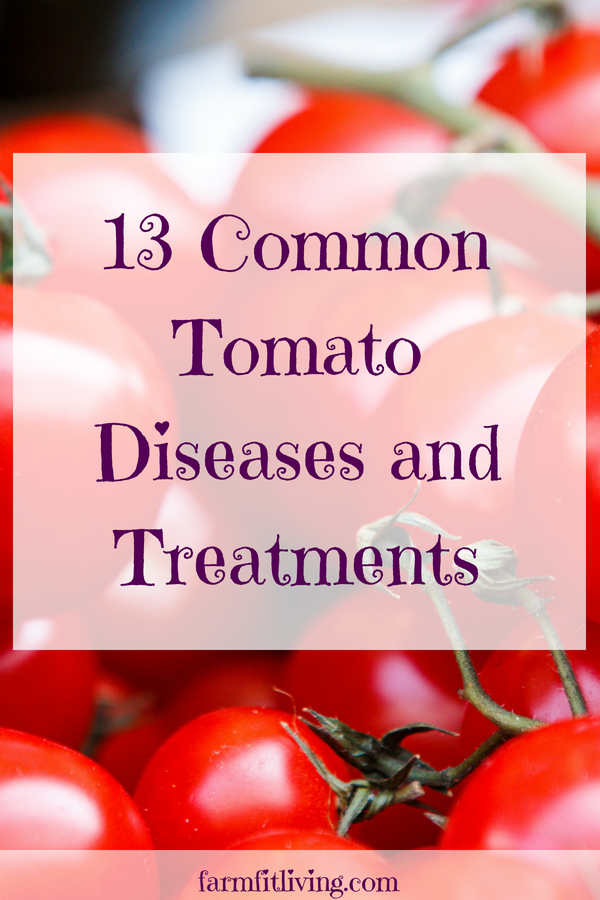 Here's 13 common tomato growing problems you might face that could keep you from growing great tomatoes. #growingtomatoes