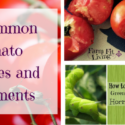 13 Common Tomato Growing Problems and Solutions