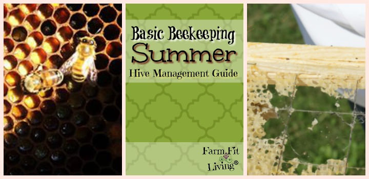 basic beekeeping summer hive management guide