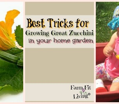 Best Tricks for Growing Great Zucchini in Your Home Garden