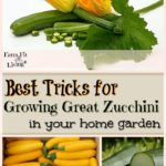 best tricks for growing great zucchini