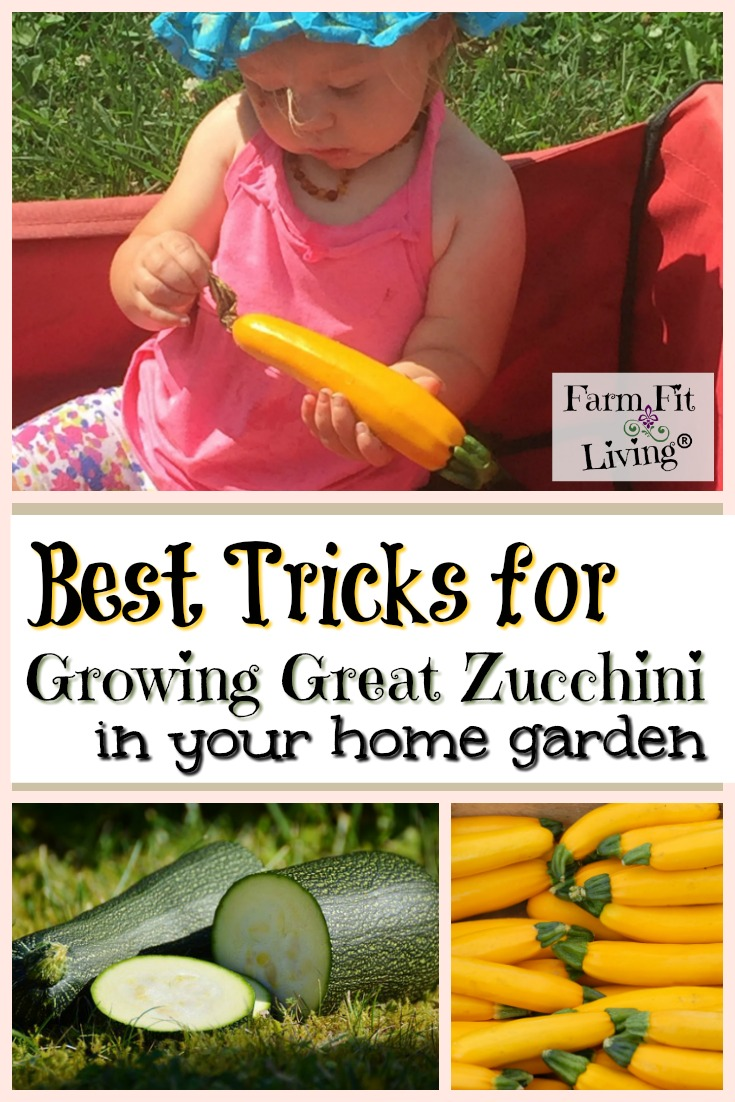 Are you wanting to grow really good zucchini? Here are my best tricks for growing great zucchini all season long. #summergarden #growinggreatzucchini