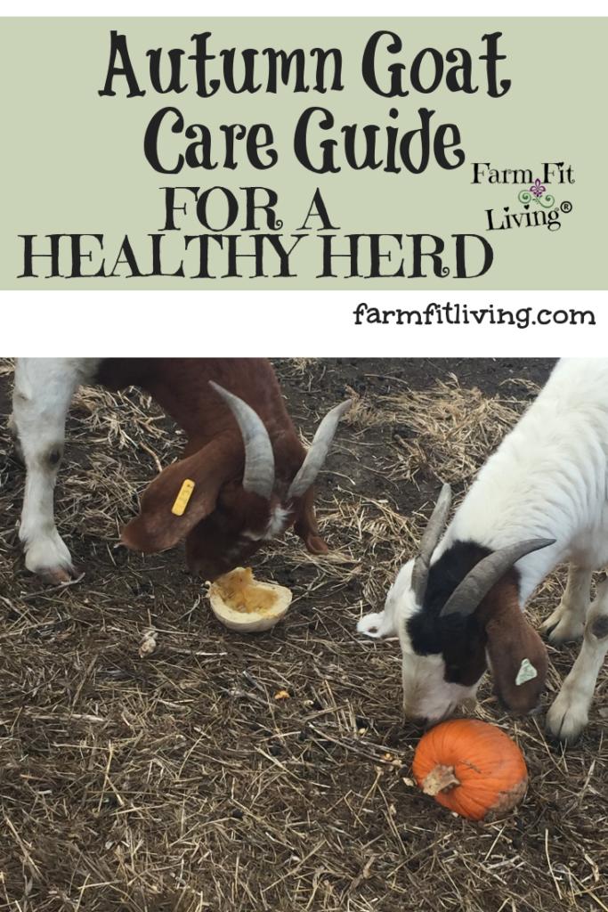 Autumn Goat Care Guide