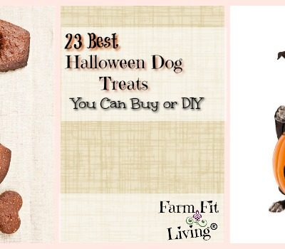 23 Best Halloween Dog Treats You can Buy or DIY