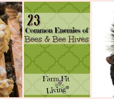 23 Common Enemies of Honey Bees & Bee Hives