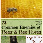 Common Enemies of Bees