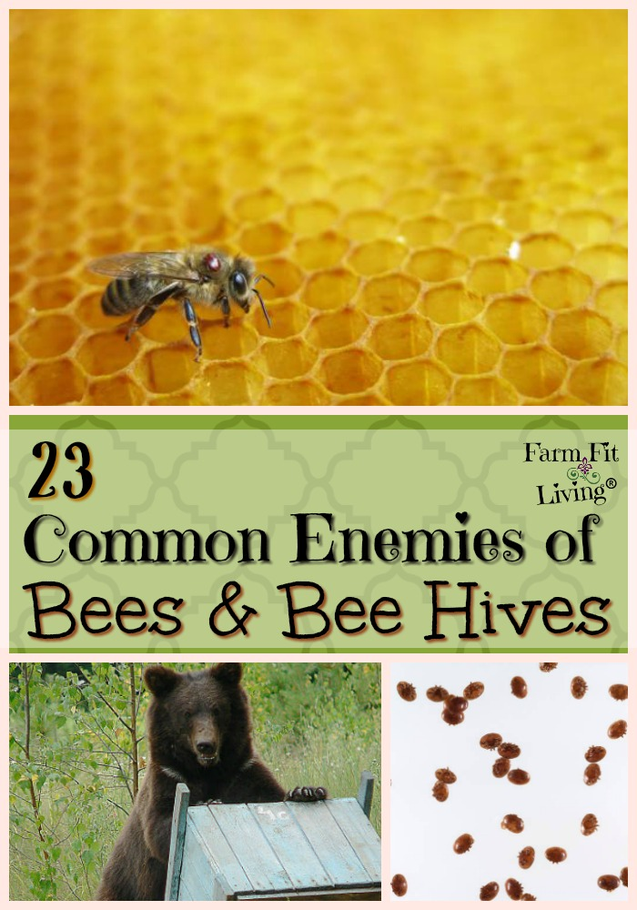 Common Enemies of Honey Bees