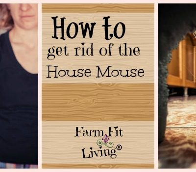 Tips on How to Get Rid of the House Mouse