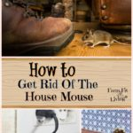 How to Git Rid of the House Mouse