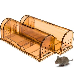 How to get rid of the house mouse