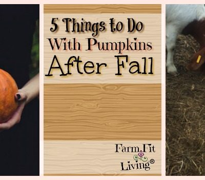 5 Things To Do with Pumpkins After Fall is Over