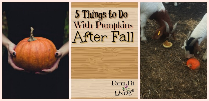 things to do with pumpkins after fall